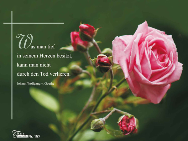 Rose Versand